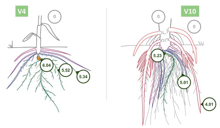 Pivot Bio Plant Roots Graphic
