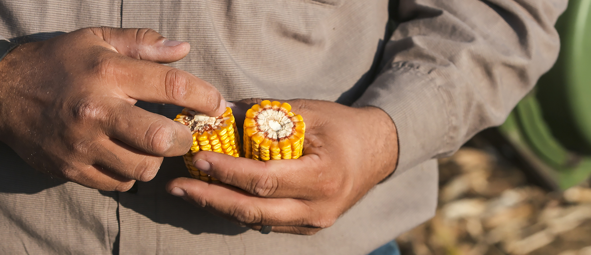 Pivot-Bio-Hand-Corn-Banner