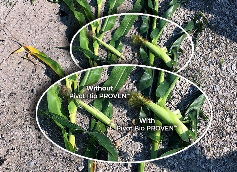 Pivot Bio PROVEN™ Corn Comparison